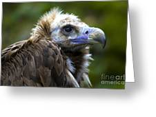 Monk Vulture Greeting Card