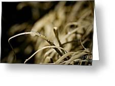 Monkey Grass Dewdew Greeting Card