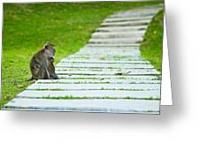Monkey Mother With Baby Resting On A Walkway Greeting Card