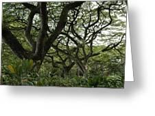 Monkeypod Trees II Greeting Card