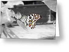 Monochromatic Butterfly Greeting Card