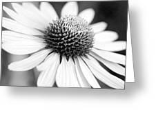 Monochrome Echinacea Greeting Card