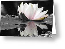 Monochrome Lily Greeting Card