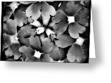 Monotone Bouquet Greeting Card