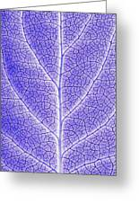 Monotone Close Up Of Leaf Greeting Card by Sean White