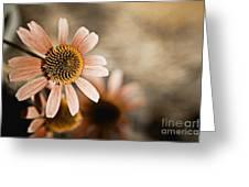 Monotone Flower Greeting Card