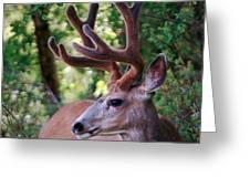 Monster Buck Greeting Card