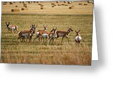 Montana Antalope 9396 Greeting Card