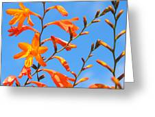 Montbretia And Blue Skies Greeting Card