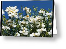 Monterey Beauty Greeting Card