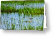 Montezuma National Wildlife Refuge Greeting Card
