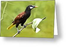 Montezuma Oropendula - Dp Greeting Card