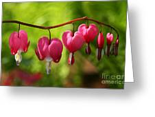 Month Of May Bleeding Hearts Greeting Card