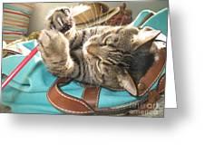 Monty Holding Paintbrush .. Greeting Card
