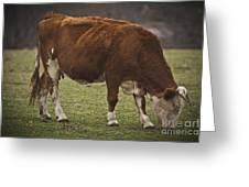 Moo Moo Cow Greeting Card