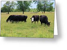 Moo Moos Greeting Card