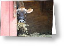 Moo Now Greeting Card by Kathy Gibbons