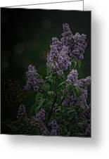 Mood Lilac Greeting Card