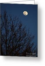 Moon And Trees Greeting Card