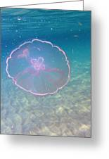 Moon Jelly Greeting Card