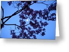 Moon Through Dogwood Greeting Card