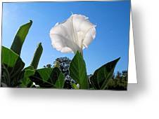 Moonflower Rising Greeting Card