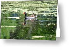 Moor Hen Greeting Card