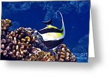 Moorish Idol On Reef Greeting Card by Bette Phelan