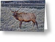 Moose 2 Greeting Card