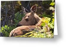 Moose Baby 5 Greeting Card