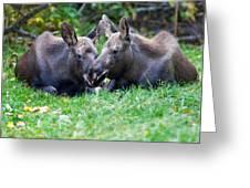 Moose Calves  Greeting Card