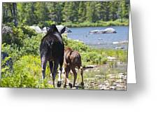 Moose Ends Baxter State Park Maine Greeting Card