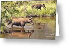 Moose Family Greeting Card