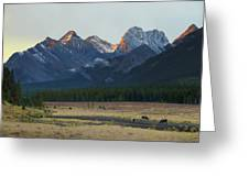 Moose Grazing At Sunset With Mountains Greeting Card by Philippe Widling