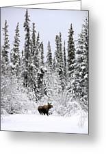 Moose In Deep Snow, Near Teslin, Yukon Greeting Card