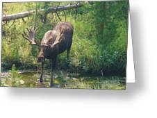Moose Is Loose Greeting Card
