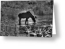 Moose Silhouette Greeting Card