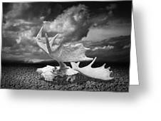 Moose Skull On Parched Earth Greeting Card