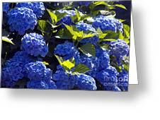 Mophead Hydrangeas Dry Brushed Greeting Card
