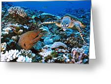 Moray Eel On A Reef Greeting Card