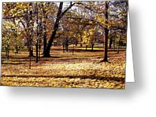 More Fall Trees Greeting Card