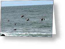 More Pelicans Greeting Card