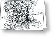 Morikami Gardens' Tree Boca Raton Florida  Greeting Card