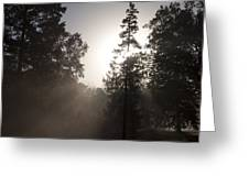 Morning At Valley Forge Greeting Card