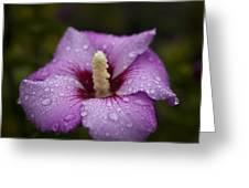 Morning Dew On Garden Flower Greeting Card