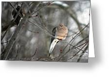 Morning Doves Greeting Card