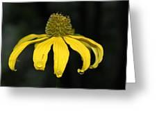 Morning Flower 2 Greeting Card