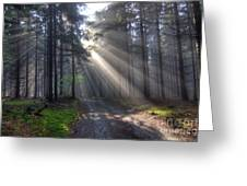 Morning Forest In Fog Greeting Card