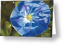 Morning Glory B Greeting Card by Elizabeth Dobbs