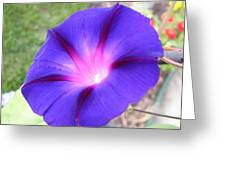 Morning Glory Fire Greeting Card